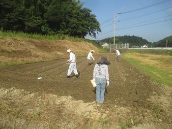 kosumosutanemaki2015.jpg