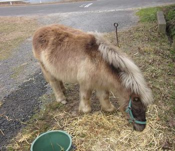 pony4.jpg